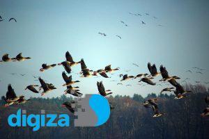 آفتکشی که نسل پرندگان را از روی زمین برمیدارد