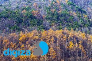 آیا درختان میتوانند به پیداکردن جسد در حال پوسیدن کمک کنند؟