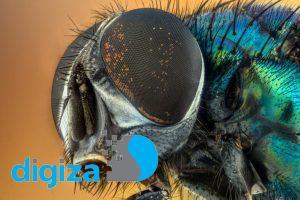 آیا میدانستید پشهها هم خطای دید دارند؟