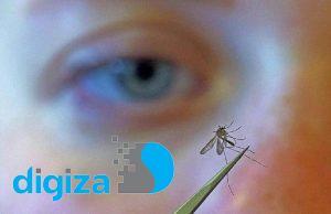 آیا پشهها طعمههای خود را انتخاب میکنند؟