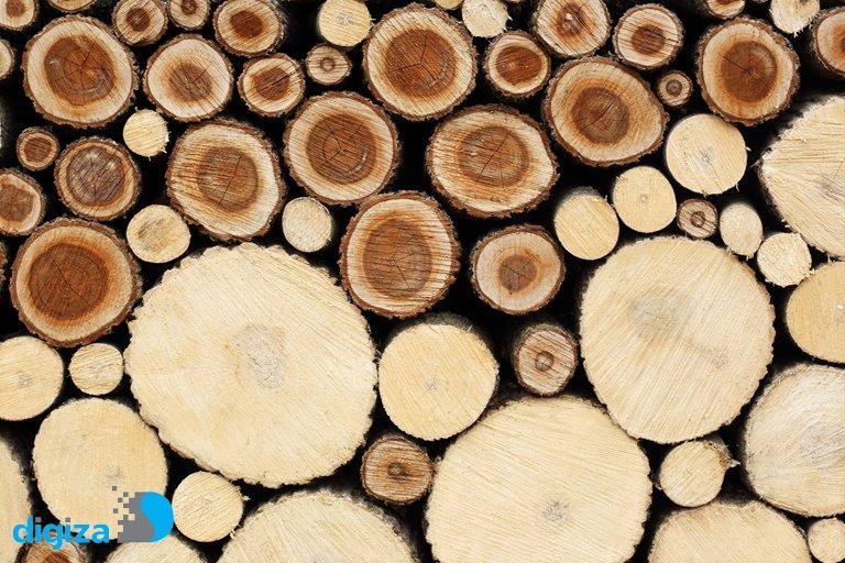 آیا چوب تولیدشده در آزمایشگاه، جای چوب حاصل از درختان را خواهد گرفت؟