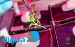 اولین پیوند گیاه در فضا چگونه انجام شد؟
