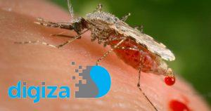 خون برای پشهها طعم آبنبات میدهد!
