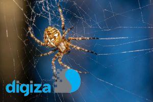 پاهای عنکبوت بدون نیاز به کمک مغز تار میبافند