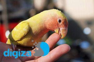 پرندگانی که با دیگران بازی میکنند، مغز بزرگتری دارند
