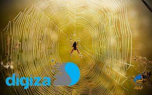 چطور عنکبوتها در فضا تار میتنند؟