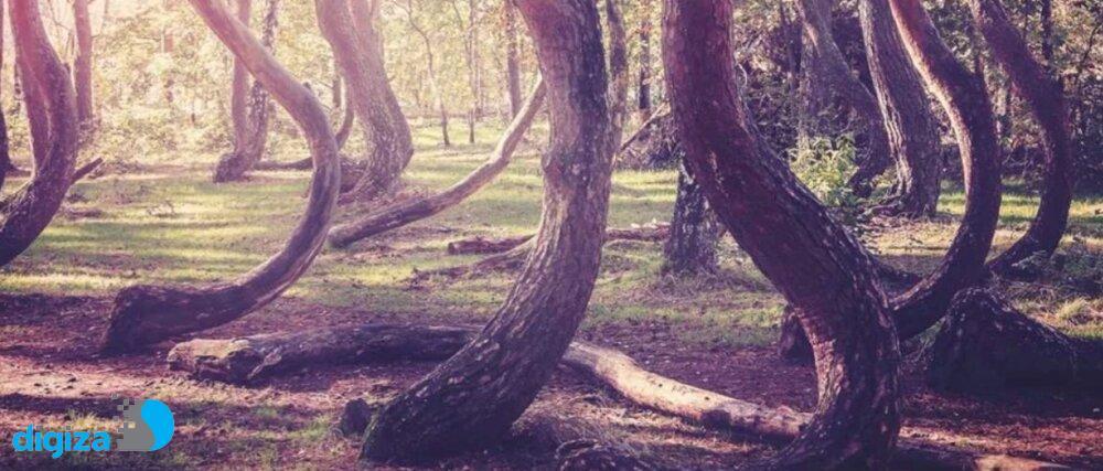چرا برخی درختها کج رشد میکنند؟