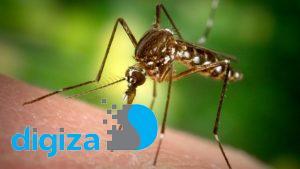 750 میلیون پشه اصلاح ژنتیکی در فلوریدا رها میشوند